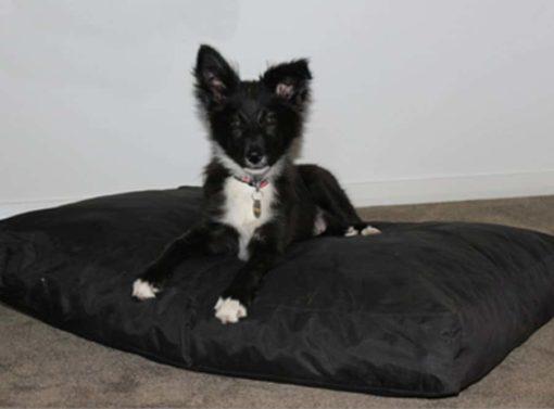 Foam filled dog bed